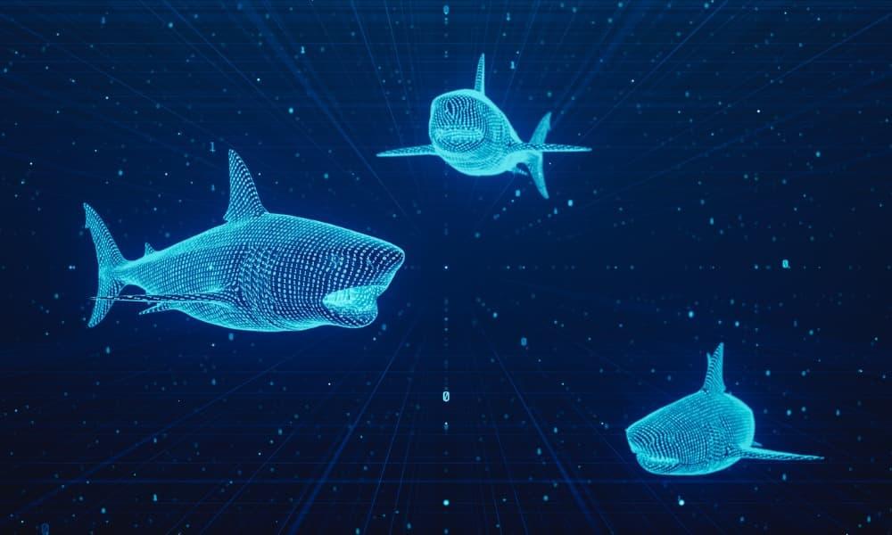 Three digital sharks on a screen representing whaling attacks